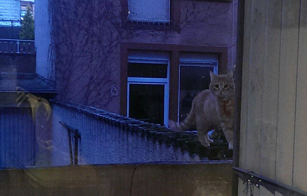 2016-05-27-Katze-Balkon
